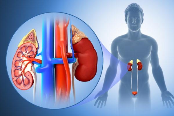 Пиелонефрит – как проявляется болезнь почек и чем она опасна