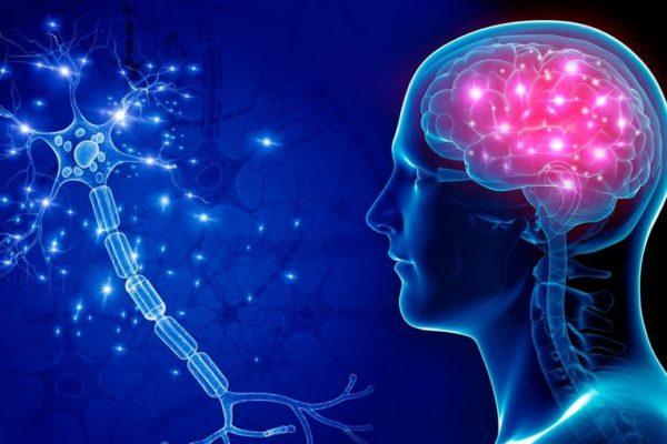 Обнаружен механизм восстановления нервных клеток